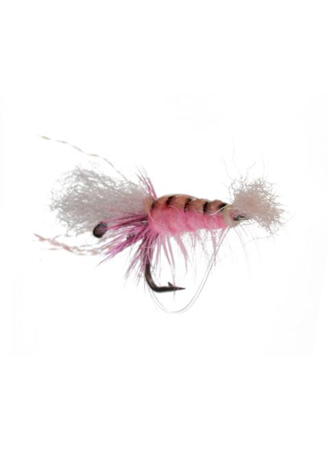 Ceviche Shrimp : Pink