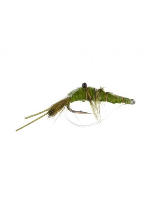 Saltwater Shrimp