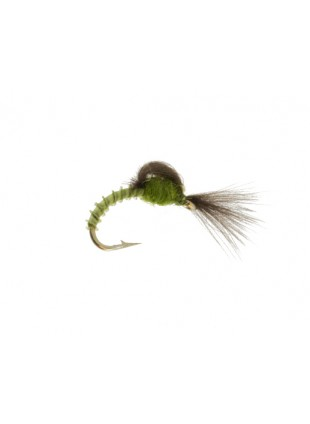 CDC Upwing Loop Emerger : Olive