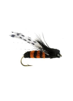 Cicada : Orange + Black
