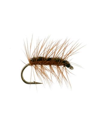 Crackleback : Brown Spider