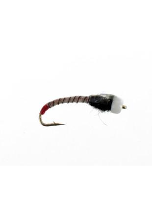 JoJo Chironomid : Zebra