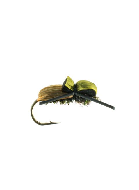 Beetle-Japanese
