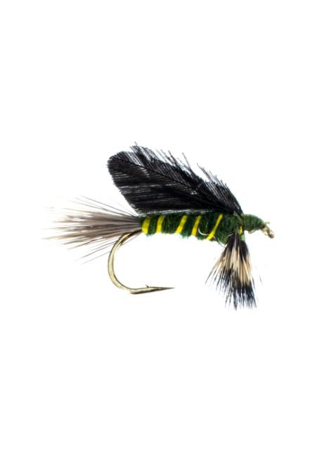 Burnt Wing-Green Drake
