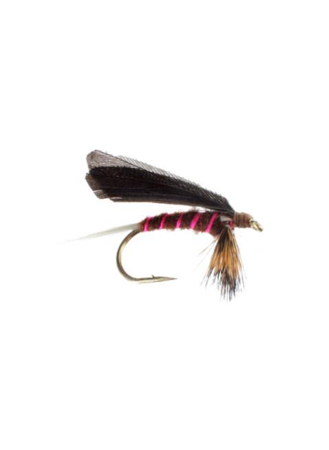 Burnt Wing-Mahogany