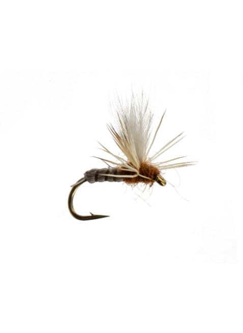 Cranefly-Deschutes