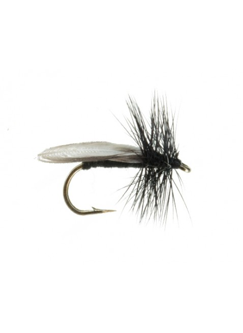 Early Black Stonefly #2