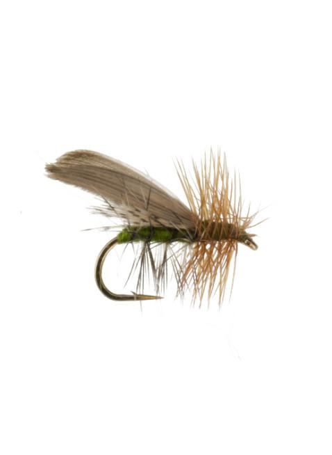 Henryville Caddis : Olive