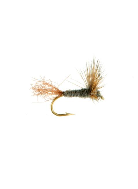 Sparkle Dun-Adams : Brown Shuck
