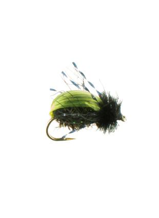 Beeltle-Kiwi