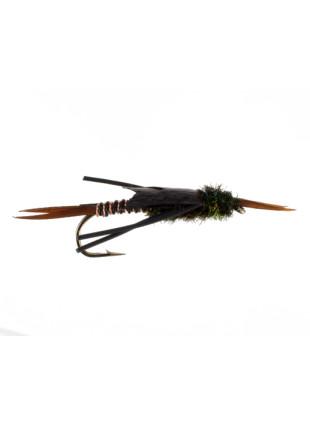 Copper Stonefly : Black