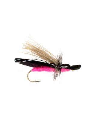 Gypsy King : Pink