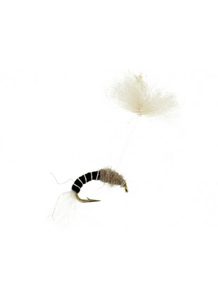 Parasol Midge : Black